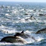delfino gruppo